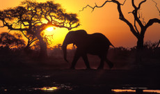 Botswana tours - The Best of Botswana and Victoria Falls
