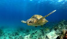 Ecuador Rundreisen - First-Class Galapagos Kreuzfahrt | Westliche Inseln