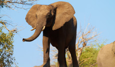 Botswana tours - 15-Day Highlights of Botswana, Victoria Falls & Cape Town