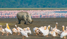 Kenya tours - The Best Of Kenya In Two Weeks