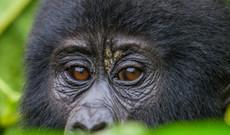 Uganda Rundreisen - Erlebnisreise durch Uganda und Ruanda