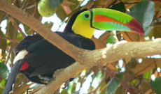 Costa Rica tours - 9 Day Tour through Costa Rica