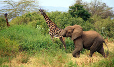 Tanzania tours - Classic Bush Safari of Northern Tanzania
