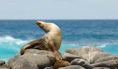Ecuador tours - Islands Hopping Galapagos