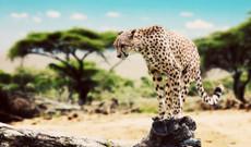 Tansania Rundreisen - Die Große Ostafrika Safari