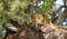Südafrika Rundreisen - 7 Tage Kruger Nationalpark Abenteuer Ihres Leben