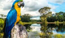 Brasilien Rundreisen - Eco Tour  Pantanal