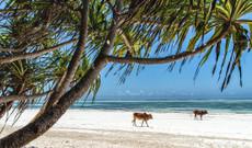 Uganda Rundreisen - Safari & Entspannung in Uganda und Sansibar