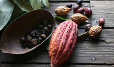 Ecuador tours - 14 Day Ecuador - Chocolate Discovery