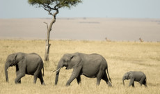 Kenya tours - 7 Day Kenya Wildlife Safari