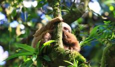 Nicaragua tours - In depth Eco Adventure
