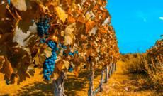 Argentinien Rundreisen - Wein und Entspannung in Mendoza