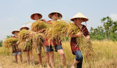 Vietnam tours - Discover the Best of Vietnam during this 14 Days Fascinating Trip