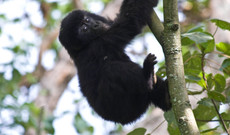 Uganda tours - Gorillas and Nationalparks in Uganda