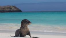 Ecuador Rundreisen - Mittelklasse Galapagos Kreuzfahrt | Südöstliche Inseln