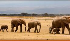 Tanzania tours - Family Safari Adventure