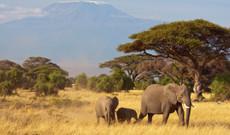 Kenia Rundreisen - Kurz-Safari - Kenias Klassiker!