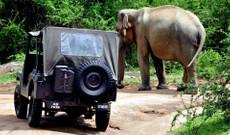 Sri Lanka Rundreisen - Sri Lanka Inselrundfahrt im Oldtimer-Jeep