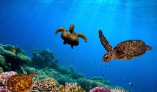 Ecuador tours - Midrange Galapagos Cruise | Eastern & Southern Islands