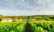 France tours - Culture and Wine Tour in Paris, Normandy, and Bordeaux