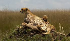 Tanzania tours - Kenya Twin Attractions Special Beach and Bush Tour