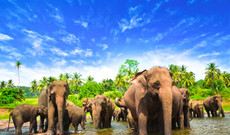 Sri Lanka tours - Best of Sri Lankan Nature & Wildlife