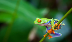 Costa Rica tours - 8 Day Costa Rica Adventure in Paradise