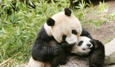 China tours - 11-Day Family Adventure in China