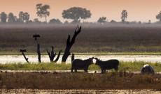 Botswana tours - Desert , Delta and Moremki