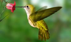 Costa Rica Rundreisen - Gruppenreise - Atemberaubende Natur