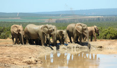 South Africa tours - 11 Days Luxurious South African Trip