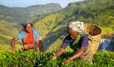 Sri Lanka Rundreisen - Auf den traditionellen Spuren Sri Lankas