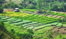 Indien Rundreisen - Südindien Deluxe – Tempel, Palmen, Tee und Gewürze