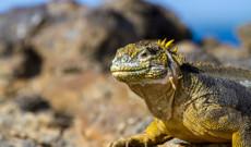 Ecuador Rundreisen - Inselhopping auf Galapagos