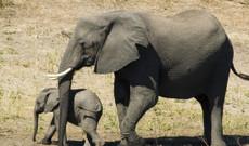 Botswana tours - 10 Day Botswana And Victoria Falls Safari