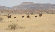 Namibia Rundreisen - Namibia | Im Mietwagen zur Safari