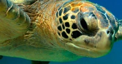 Galapagos Reizen