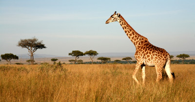 High Quality Africa Tours | Tailor-Made tours | trip me